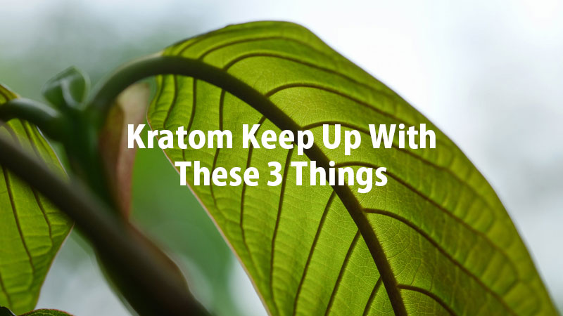 Before-You-Buy-Kratom-Keep-Up-With-These-3-Things