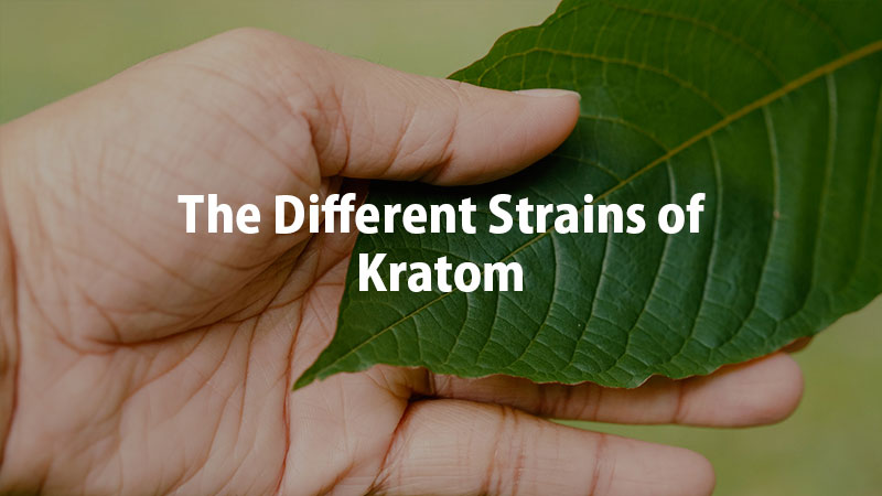 the-Different-Strains-of-Kratom