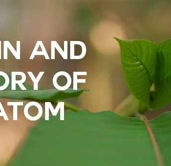 origin-and-history-of-kratom
