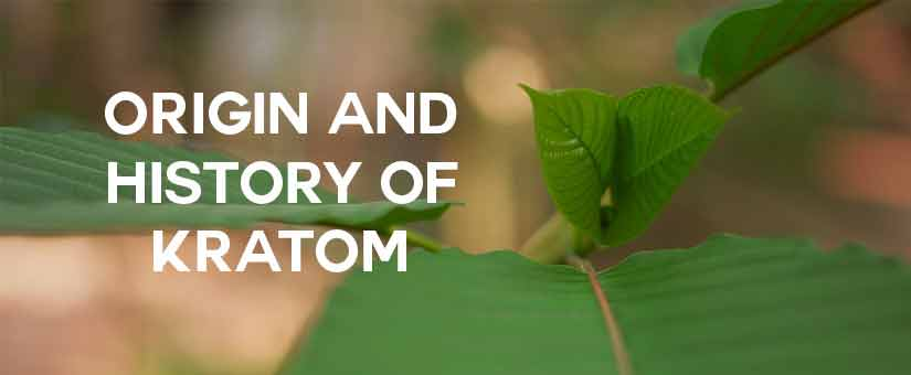 origin-and-history-of-kratom