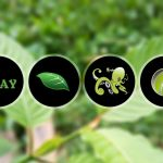 Find right kratom for sale