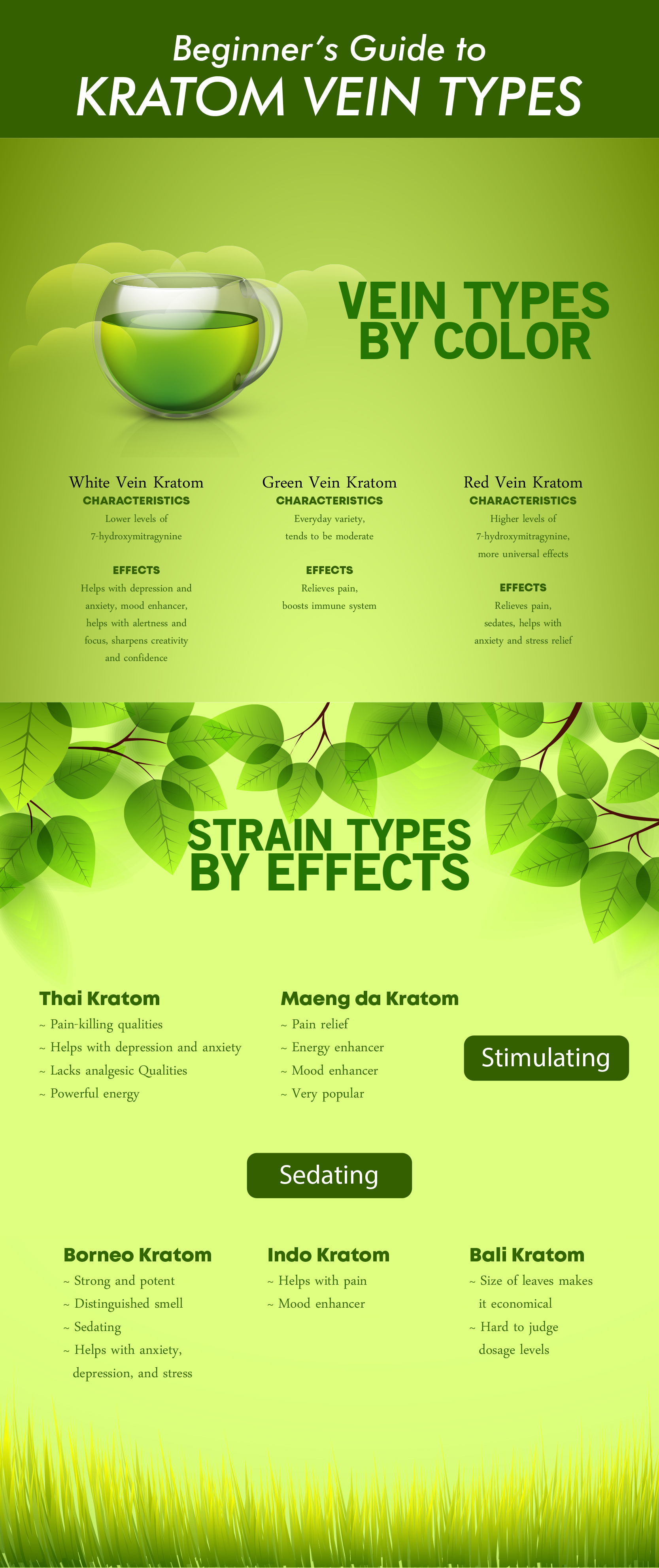 Beginners Guide to Kratom Vein Types Infographic
