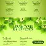 Beginners Guide to Kratom Infographic