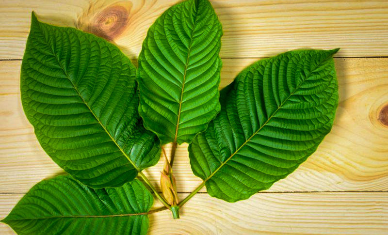 Top 3 most Euphoric Kratom that you should know