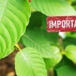 important to Keep Fresh Kratom